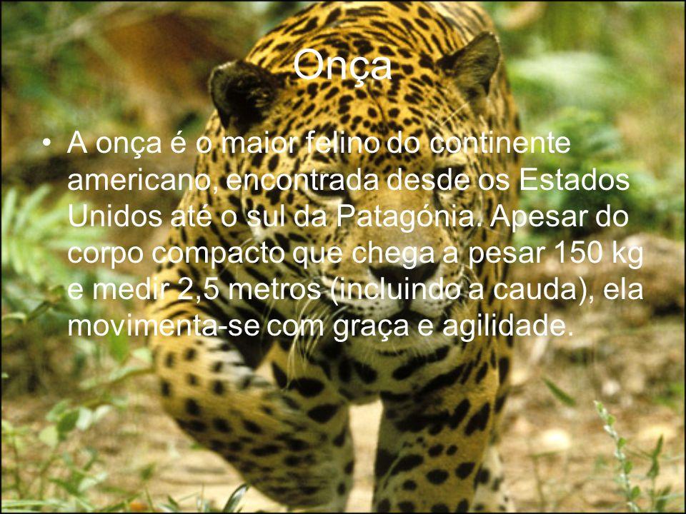 Onça A onça é o maior felino do continente americano, encontrada desde os Estados Unidos até o sul da Patagónia. Apesar do corpo compacto que chega a