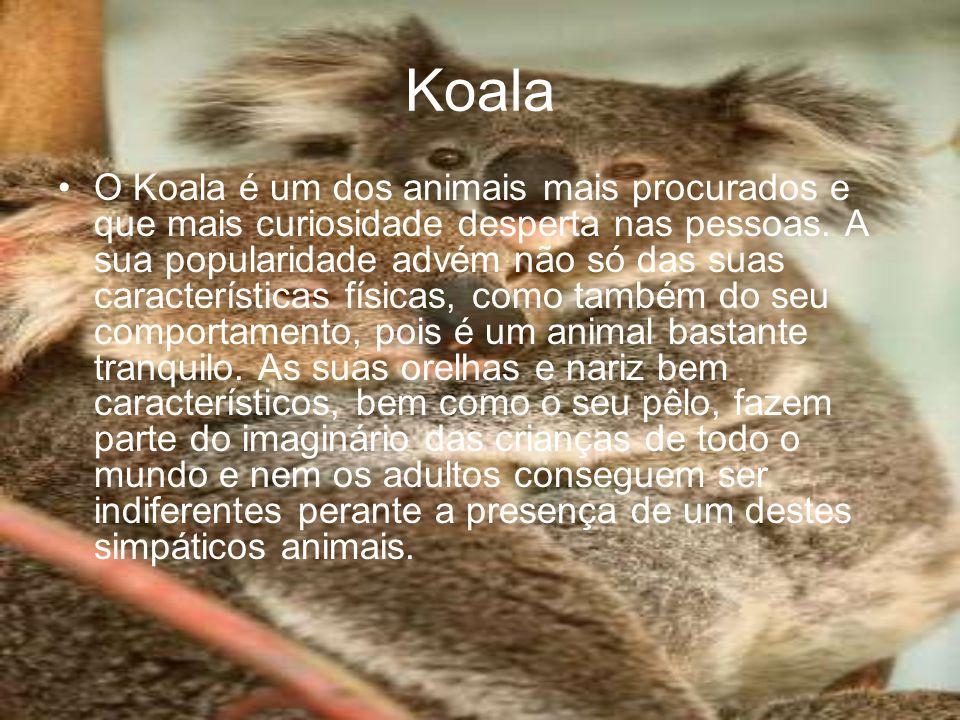 Koala O Koala é um dos animais mais procurados e que mais curiosidade desperta nas pessoas. A sua popularidade advém não só das suas características f