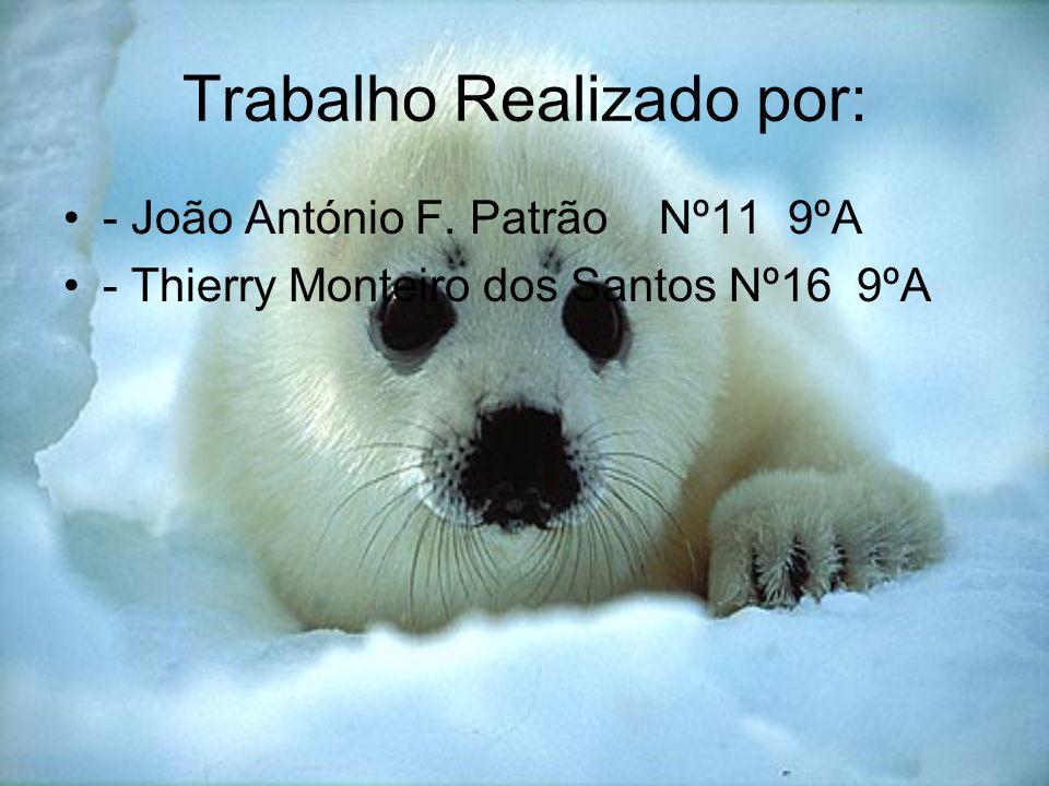Trabalho Realizado por: - João António F. Patrão Nº11 9ºA - Thierry Monteiro dos Santos Nº16 9ºA