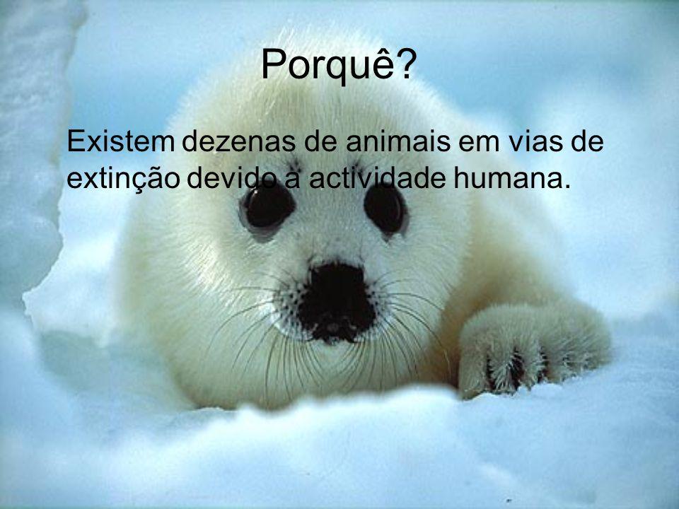 Porquê? Existem dezenas de animais em vias de extinção devido a actividade humana.