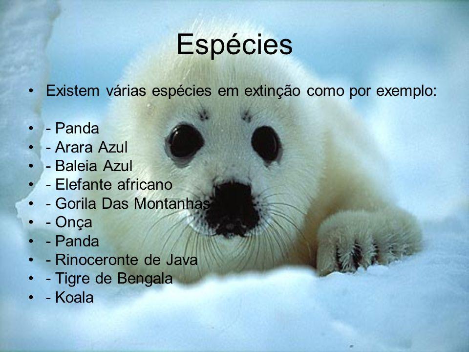 Espécies Existem várias espécies em extinção como por exemplo: - Panda - Arara Azul - Baleia Azul - Elefante africano - Gorila Das Montanhas - Onça -