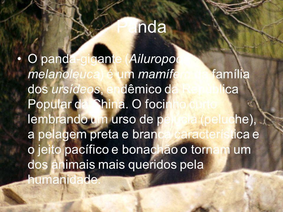 Panda O panda-gigante (Ailuropoda melanoleuca) é um mamífero da família dos ursídeos, endêmico da República Popular da China. O focinho curto lembrand