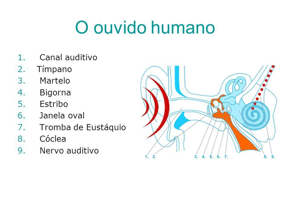 O ouvido humano 1. Canal auditivo 2.Tímpano 3. Martelo 4. Bigorna 5. Estribo 6. Janela oval 7. Tromba de Eustáquio 8. Cóclea 9. Nervo auditivo