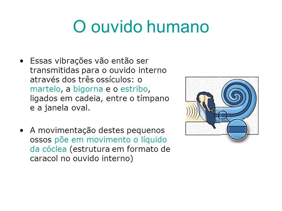 O ouvido humano A cóclea tem vinte mil células ciliadas, algumas das quais processam os sons fortes e outras os fracos.
