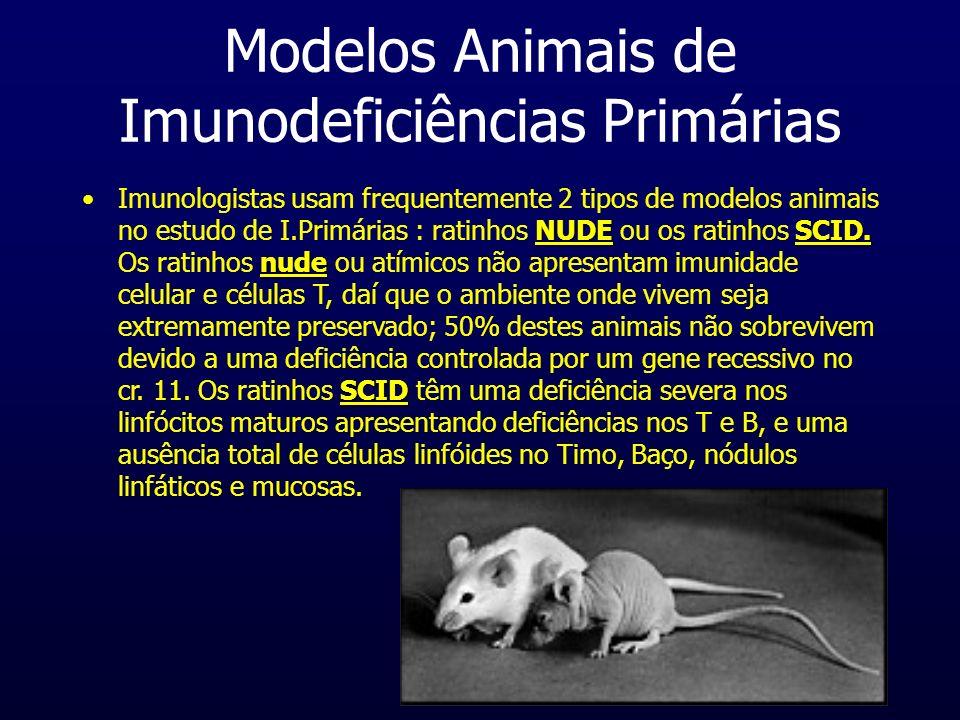 Modelos Animais de Imunodeficiências Primárias NUDESCID. nude SCIDImunologistas usam frequentemente 2 tipos de modelos animais no estudo de I.Primária
