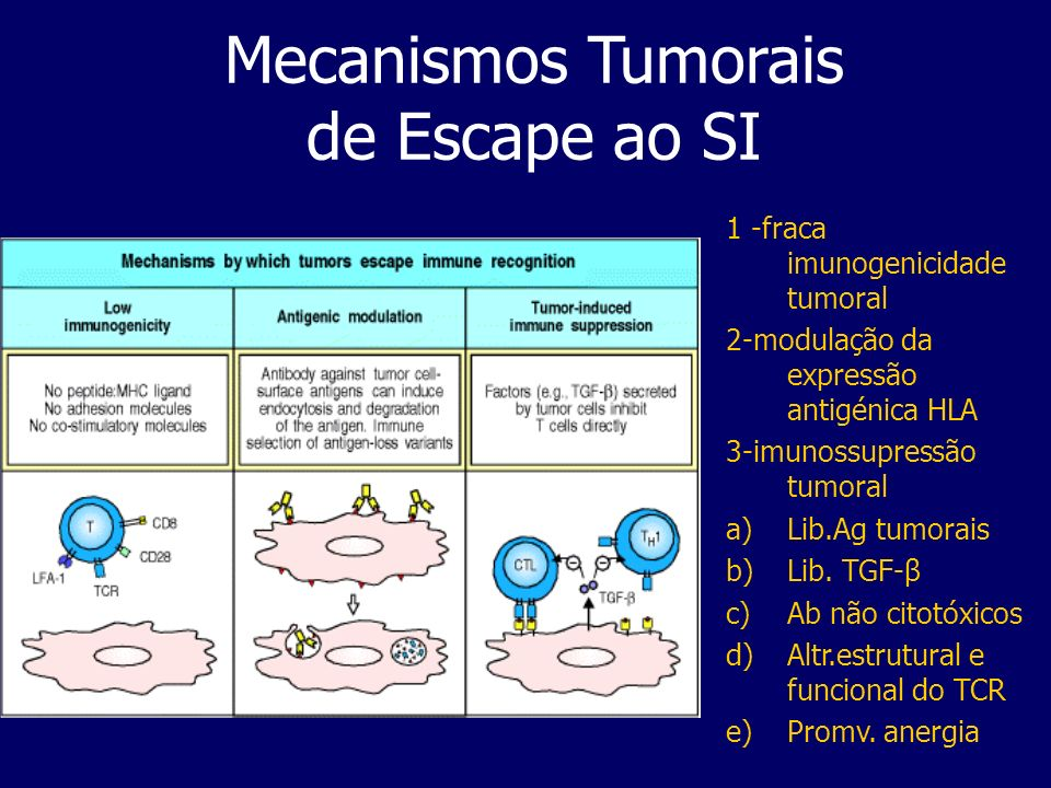 Mecanismos Tumorais de Escape ao SI 1 -fraca imunogenicidade tumoral 2-modulação da expressão antigénica HLA 3-imunossupressão tumoral a)Lib.Ag tumorais b)Lib.