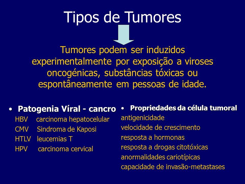 Tipos de Tumores Tumores podem ser induzidos experimentalmente por exposição a viroses oncogénicas, substâncias tóxicas ou espontâneamente em pessoas de idade.