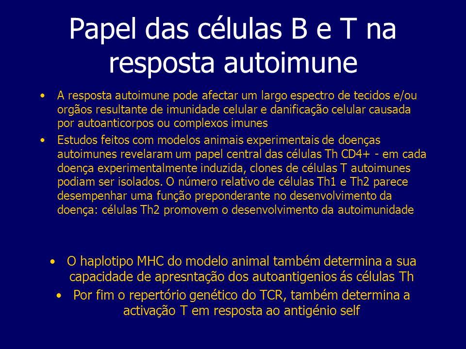 Papel das células B e T na resposta autoimune A resposta autoimune pode afectar um largo espectro de tecidos e/ou orgãos resultante de imunidade celular e danificação celular causada por autoanticorpos ou complexos imunes Estudos feitos com modelos animais experimentais de doenças autoimunes revelaram um papel central das células Th CD4+ - em cada doença experimentalmente induzida, clones de células T autoimunes podiam ser isolados.
