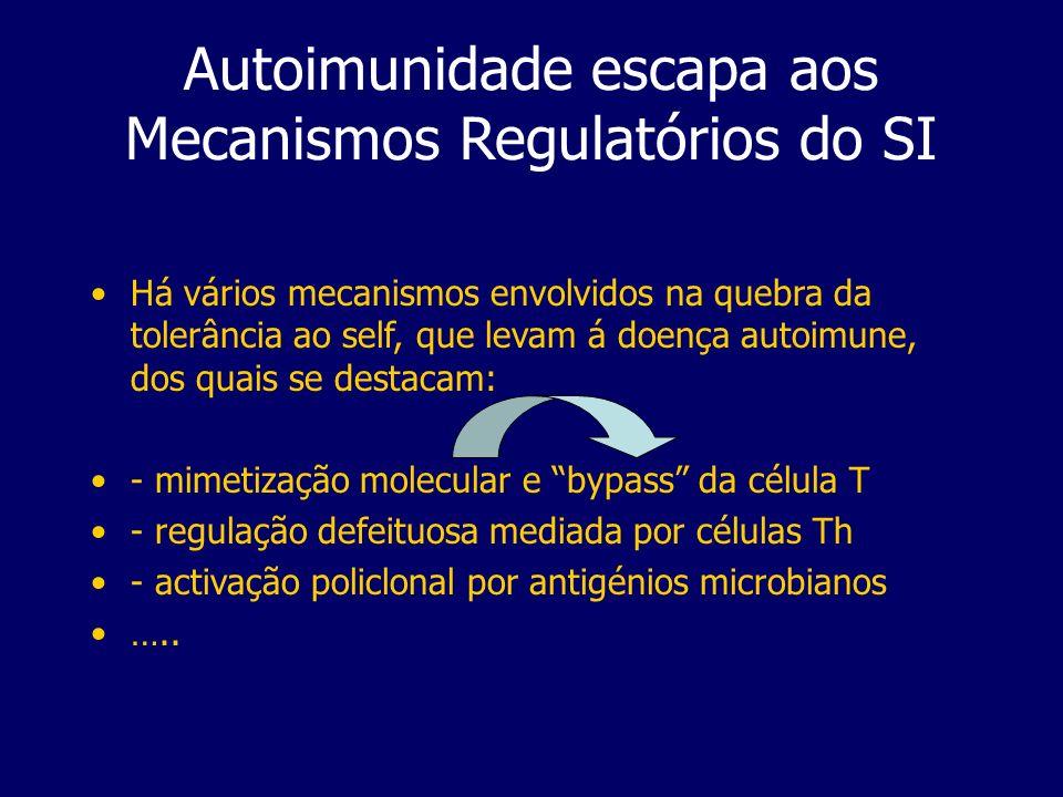 Autoimunidade escapa aos Mecanismos Regulatórios do SI Há vários mecanismos envolvidos na quebra da tolerância ao self, que levam á doença autoimune, dos quais se destacam: - mimetização molecular e bypass da célula T - regulação defeituosa mediada por células Th - activação policlonal por antigénios microbianos …..