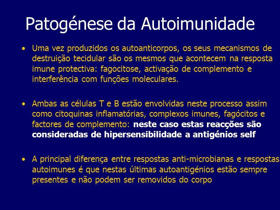 Patogénese da Autoimunidade Uma vez produzidos os autoanticorpos, os seus mecanismos de destruição tecidular são os mesmos que acontecem na resposta imune protectiva: fagocitose, activação de complemento e interferência com funções moleculares.