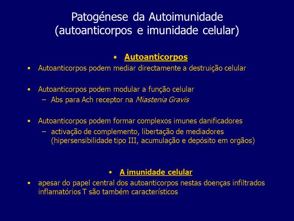 Patogénese da Autoimunidade (autoanticorpos e imunidade celular) AutoanticorposAutoanticorpos Autoanticorpos podem mediar directamente a destruição celular Autoanticorpos podem modular a função celular –Abs para Ach receptor na Miastenia Gravis Autoanticorpos podem formar complexos imunes danificadores –activação de complemento, libertação de mediadores (hipersensibilidade tipo III, acumulação e depósito em orgãos) A imunidade celularA imunidade celular apesar do papel central dos autoanticorpos nestas doenças infiltrados inflamatórios T são também característicos