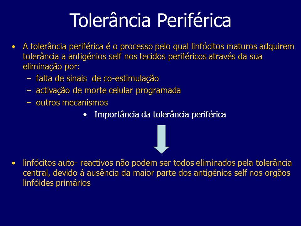 Tolerância Periférica A tolerância periférica é o processo pelo qual linfócitos maturos adquirem tolerância a antigénios self nos tecidos periféricos através da sua eliminação por: –falta de sinais de co-estimulação –activação de morte celular programada –outros mecanismos Importância da tolerância periférica linfócitos auto- reactivos não podem ser todos eliminados pela tolerância central, devido á ausência da maior parte dos antigénios self nos orgãos linfóides primários