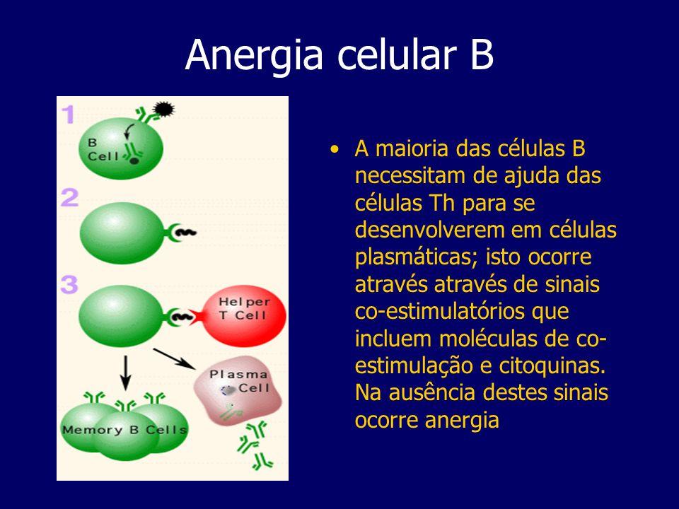 Anergia celular B A maioria das células B necessitam de ajuda das células Th para se desenvolverem em células plasmáticas; isto ocorre através através de sinais co-estimulatórios que incluem moléculas de co- estimulação e citoquinas.