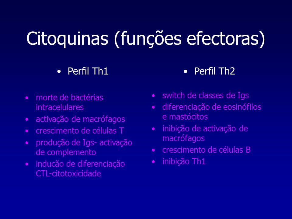 Citoquinas (funções efectoras) Perfil Th1 morte de bactérias intracelulares activação de macrófagos crescimento de células T produção de Igs- activaçã