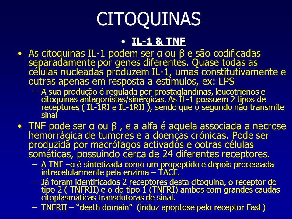 CITOQUINAS IL-1 & TNFIL-1 & TNF As citoquinas IL-1 podem ser α ou β e são codificadas separadamente por genes diferentes. Quase todas as células nucle