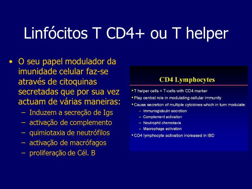Linfócitos T CD4+ ou T helper O seu papel modulador da imunidade celular faz-se através de citoquinas secretadas que por sua vez actuam de várias mane