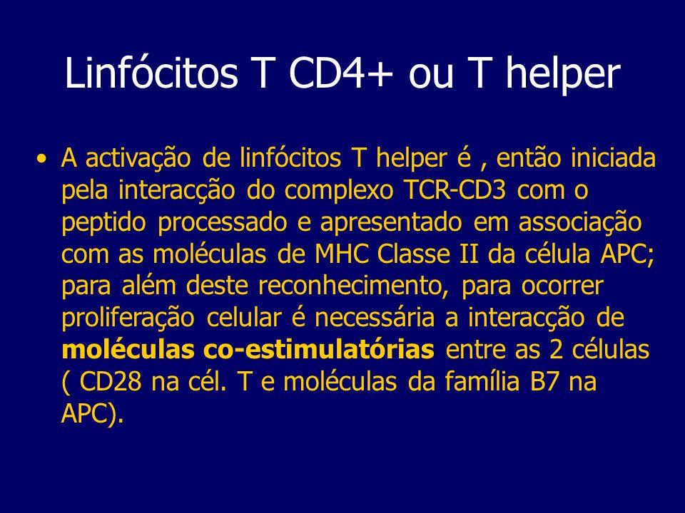 Linfócitos T CD4+ ou T helper A activação de linfócitos T helper é, então iniciada pela interacção do complexo TCR-CD3 com o peptido processado e apre