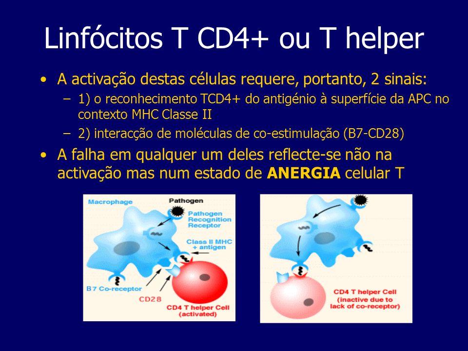 Linfócitos T CD4+ ou T helper A activação destas células requere, portanto, 2 sinais: –1) o reconhecimento TCD4+ do antigénio à superfície da APC no c