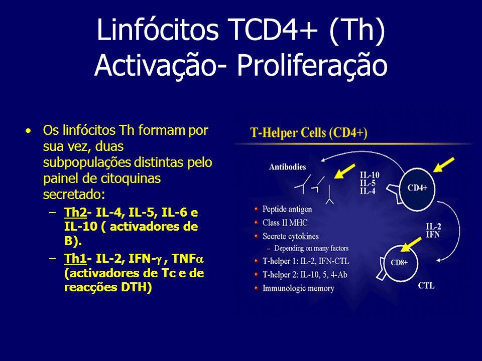 Linfócitos TCD4+ (Th) Activação- Proliferação Os linfócitos Th formam por sua vez, duas subpopulações distintas pelo painel de citoquinas secretado: –