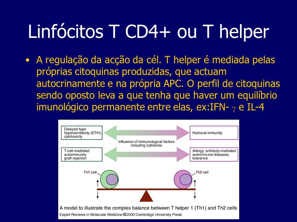 Linfócitos T CD4+ ou T helper A regulação da acção da cél. T helper é mediada pelas próprias citoquinas produzidas, que actuam autocrinamente e na pró