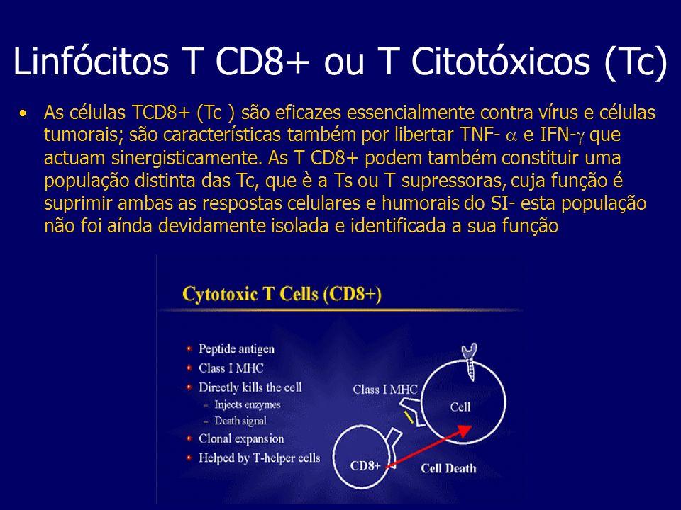 As células TCD8+ (Tc ) são eficazes essencialmente contra vírus e células tumorais; são características também por libertar TNF- e IFN- que actuam sin
