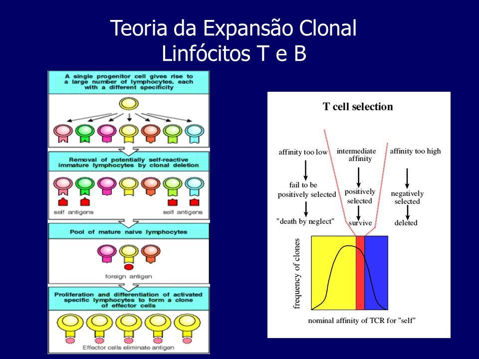 Teoria da Expansão Clonal Linfócitos T e B