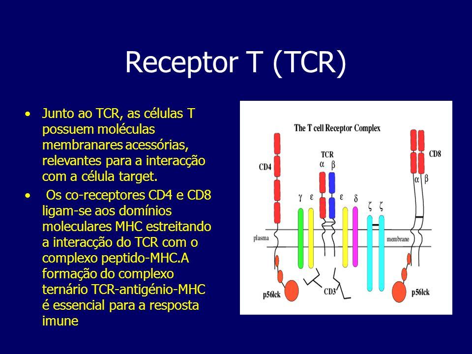 Receptor T (TCR) Junto ao TCR, as células T possuem moléculas membranares acessórias, relevantes para a interacção com a célula target. Os co-receptor