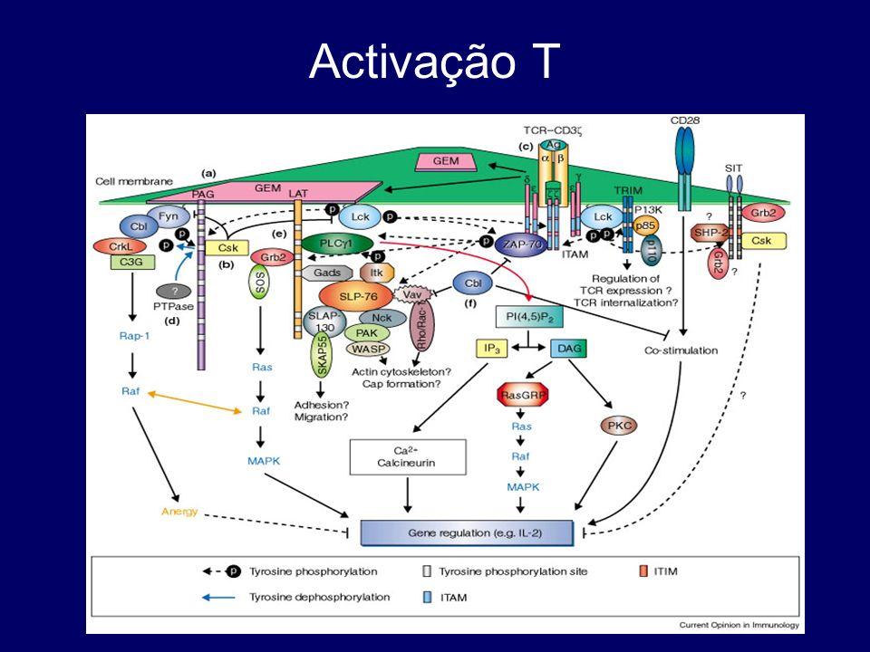 Activação T