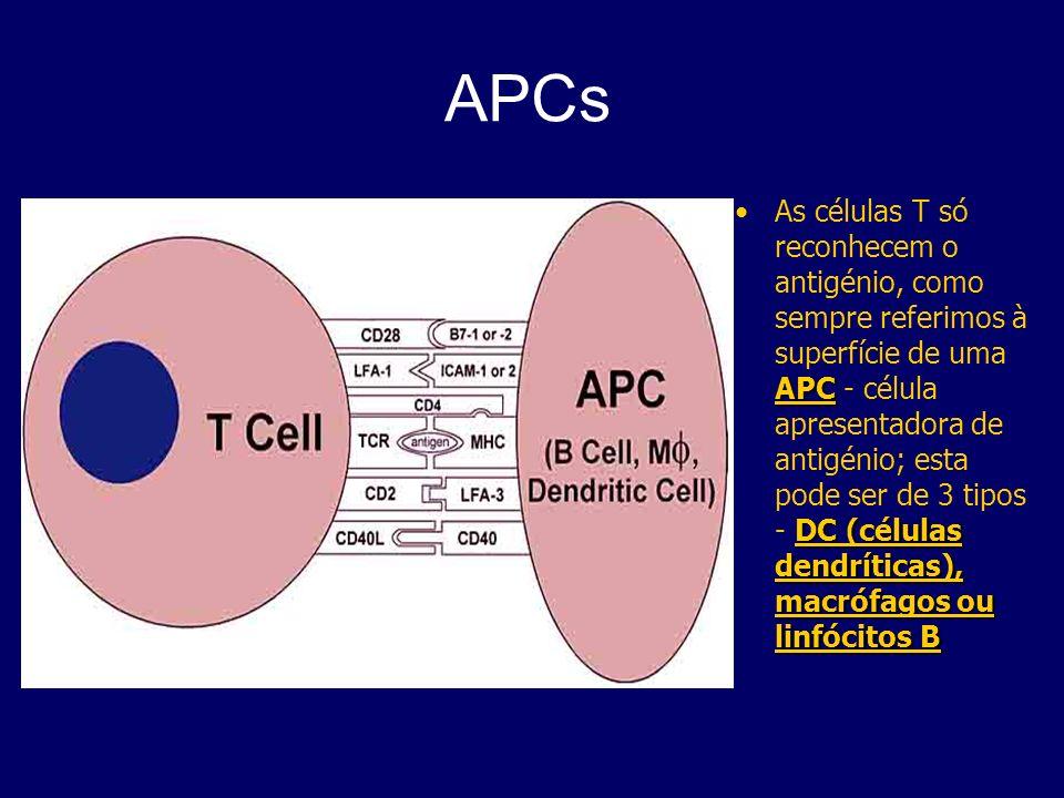 APCs APC DC (células dendríticas), macrófagos ou linfócitos BAs células T só reconhecem o antigénio, como sempre referimos à superfície de uma APC - c