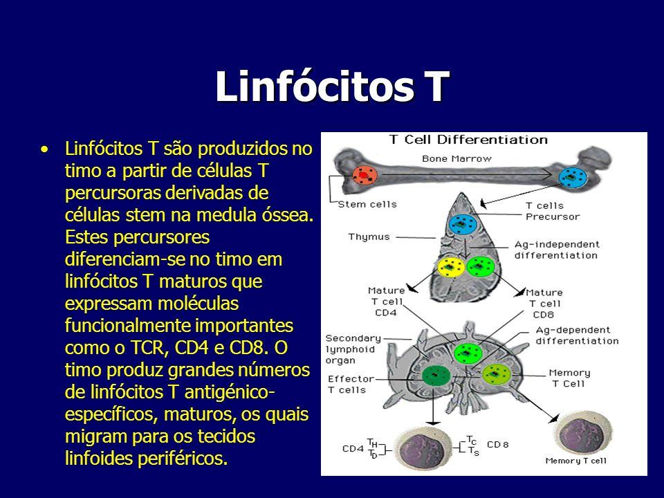 Linfócitos T Linfócitos T são produzidos no timo a partir de células T percursoras derivadas de células stem na medula óssea. Estes percursores difere