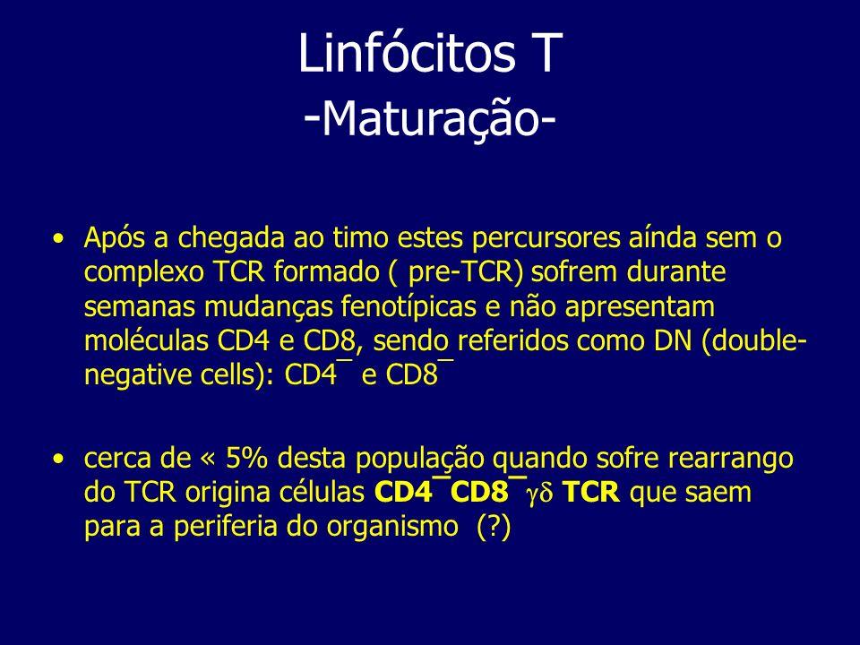 Após a chegada ao timo estes percursores aínda sem o complexo TCR formado ( pre-TCR) sofrem durante semanas mudanças fenotípicas e não apresentam molé