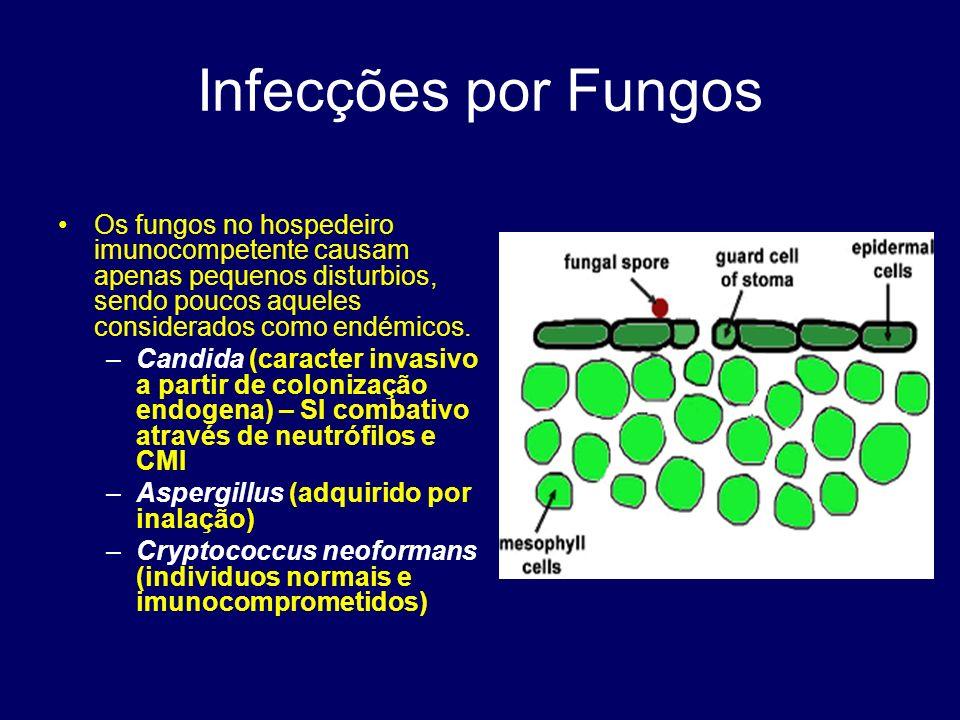 Infecções por Fungos Os fungos no hospedeiro imunocompetente causam apenas pequenos disturbios, sendo poucos aqueles considerados como endémicos. –Can