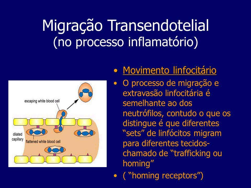 Migração Transendotelial (no processo inflamatório) Movimento linfocitárioMovimento linfocitário O processo de migração e extravasão linfocitária é se