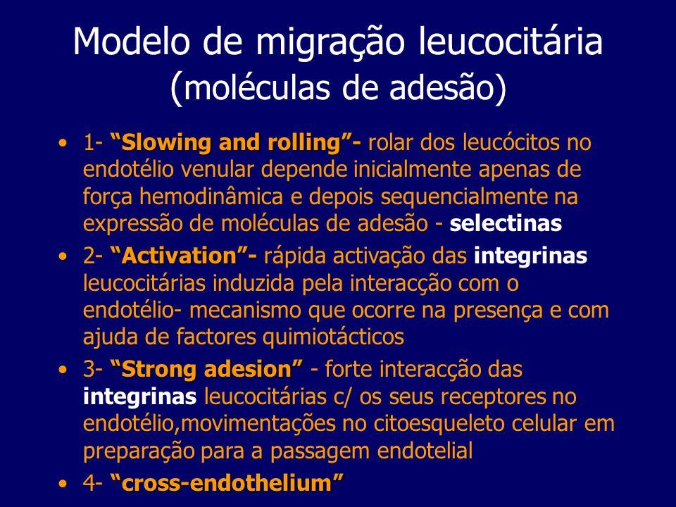Modelo de migração leucocitária ( moléculas de adesão) Slowing and rolling-1- Slowing and rolling- rolar dos leucócitos no endotélio venular depende i