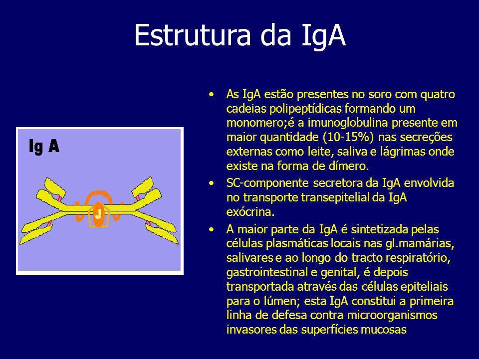 Estrutura da IgA As IgA estão presentes no soro com quatro cadeias polipeptídicas formando um monomero;é a imunoglobulina presente em maior quantidade (10-15%) nas secreções externas como leite, saliva e lágrimas onde existe na forma de dímero.