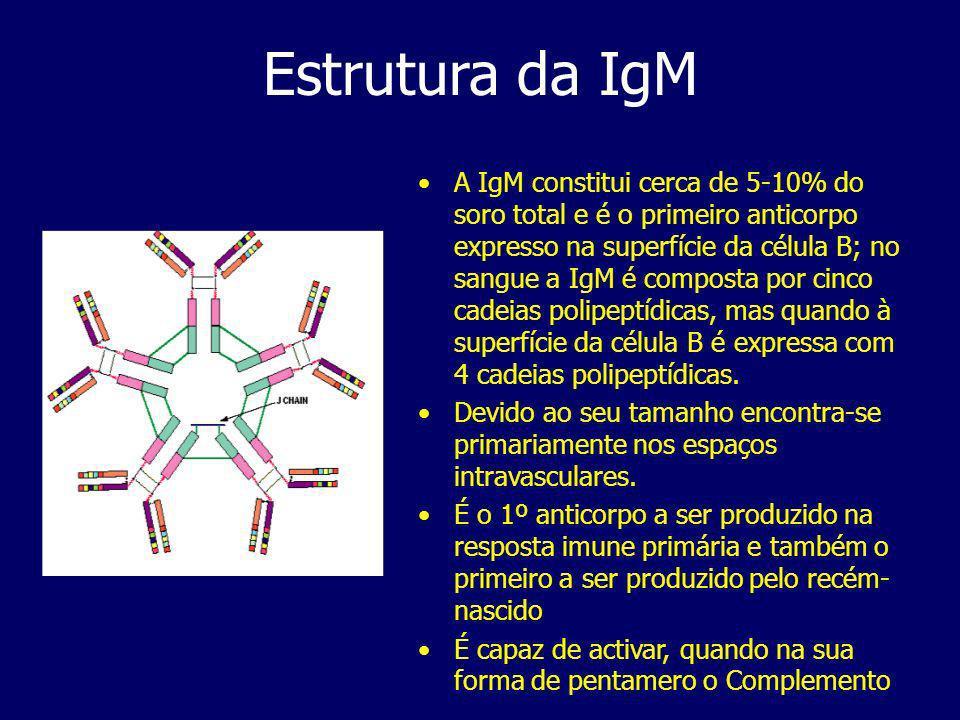 Estrutura da IgM A IgM constitui cerca de 5-10% do soro total e é o primeiro anticorpo expresso na superfície da célula B; no sangue a IgM é composta por cinco cadeias polipeptídicas, mas quando à superfície da célula B é expressa com 4 cadeias polipeptídicas.