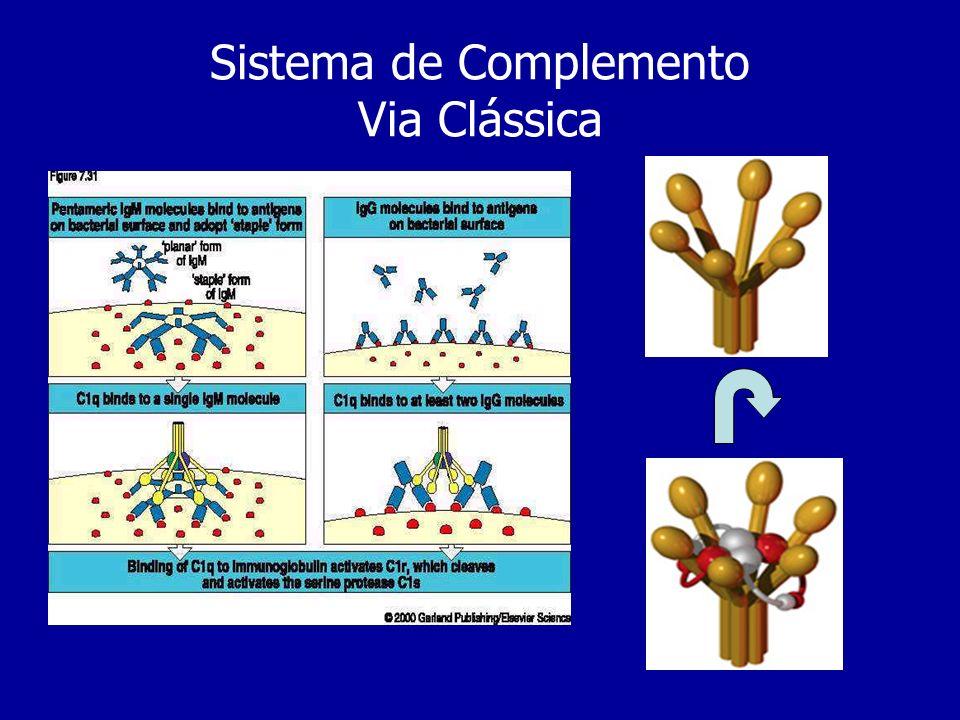 Sistema de Complemento Via Clássica