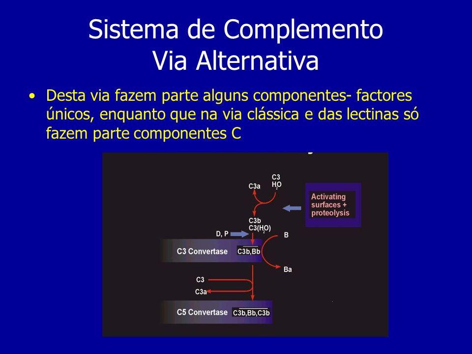 Sistema de Complemento Via Alternativa Desta via fazem parte alguns componentes- factores únicos, enquanto que na via clássica e das lectinas só fazem