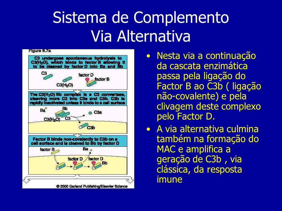 Sistema de Complemento Via Alternativa Nesta via a continuação da cascata enzimática passa pela ligação do Factor B ao C3b ( ligação não-covalente) e