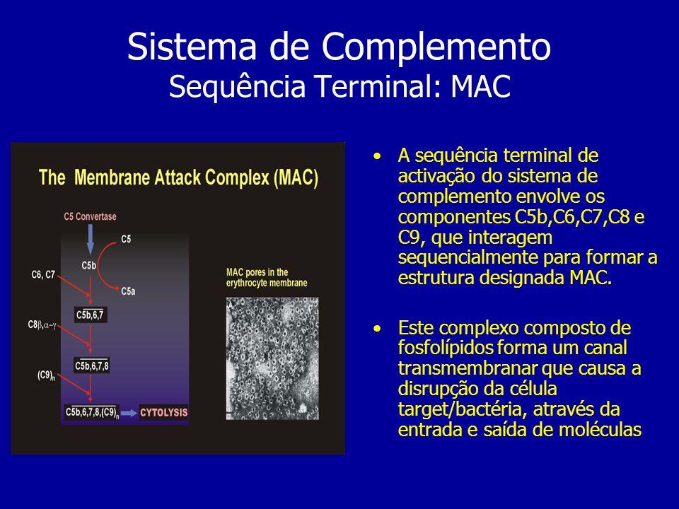 Sistema de Complemento Sequência Terminal: MAC A sequência terminal de activação do sistema de complemento envolve os componentes C5b,C6,C7,C8 e C9, q