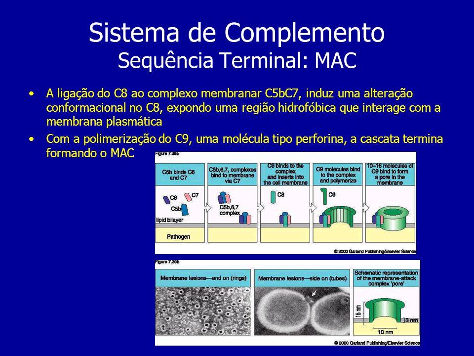 Sistema de Complemento Sequência Terminal: MAC A ligação do C8 ao complexo membranar C5bC7, induz uma alteração conformacional no C8, expondo uma regi