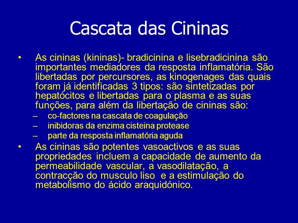 Cascata das Cininas As cininas (kininas)- bradicinina e lisebradicinina são importantes mediadores da resposta inflamatória. São libertadas por percur