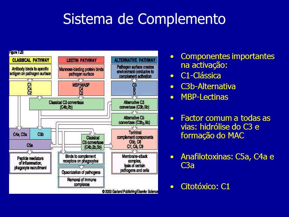 Sistema de Complemento Componentes importantes na activação: C1-Clássica C3b-Alternativa MBP-Lectinas Factor comum a todas as vias: hidrólise do C3 e