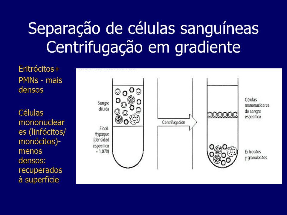 Análises Clínicas (Linfócitos) Separação de células sanguíneas Centrifugação em gradiente Análises Clínicas (Linfócitos) Colheita + Heparina Decantar sobre tubo com um gradiente de Ficoll- Hypaque.