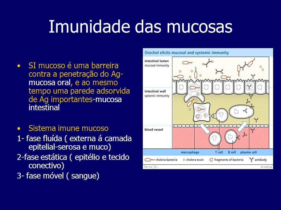 Imunidade das mucosas Alguns componentes das 3 fases: Fase Fluída a) mucosa- mucinas e histatinas serosa- lactoferrina, lisozima e peroxidase salivar (factores não-específicos) e aínda anticorpos sIgA Fase estática a) epitélio - subst.