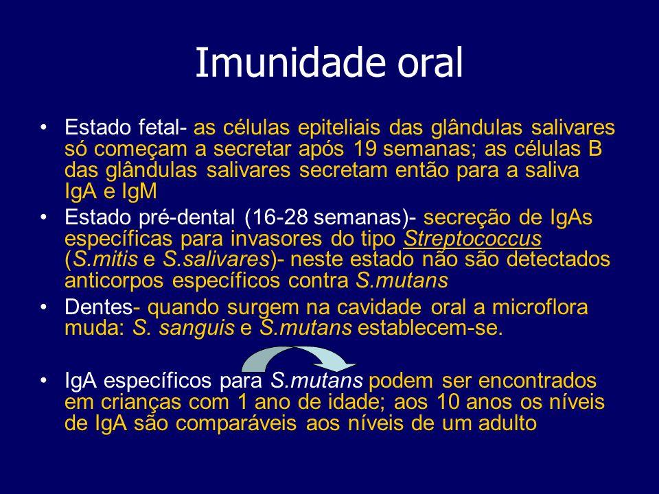 Imunidade oral Estado fetal- as células epiteliais das glândulas salivares só começam a secretar após 19 semanas; as células B das glândulas salivares