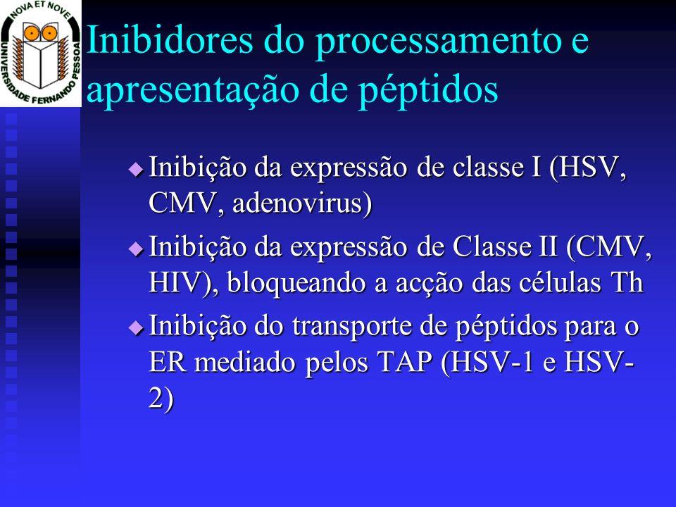 Inibidores do processamento e apresentação de péptidos Inibição da expressão de classe I (HSV, CMV, adenovirus) Inibição da expressão de classe I (HSV, CMV, adenovirus) Inibição da expressão de Classe II (CMV, HIV), bloqueando a acção das células Th Inibição da expressão de Classe II (CMV, HIV), bloqueando a acção das células Th Inibição do transporte de péptidos para o ER mediado pelos TAP (HSV-1 e HSV- 2) Inibição do transporte de péptidos para o ER mediado pelos TAP (HSV-1 e HSV- 2)