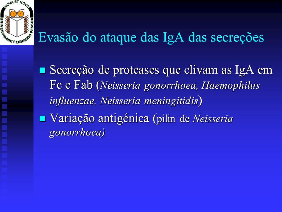 Evasão do ataque das IgA das secreções Secreção de proteases que clivam as IgA em Fc e Fab ( Neisseria gonorrhoea, Haemophilus influenzae, Neisseria meningitidis ) Secreção de proteases que clivam as IgA em Fc e Fab ( Neisseria gonorrhoea, Haemophilus influenzae, Neisseria meningitidis ) Variação antigénica ( pilin de Neisseria gonorrhoea) Variação antigénica ( pilin de Neisseria gonorrhoea)