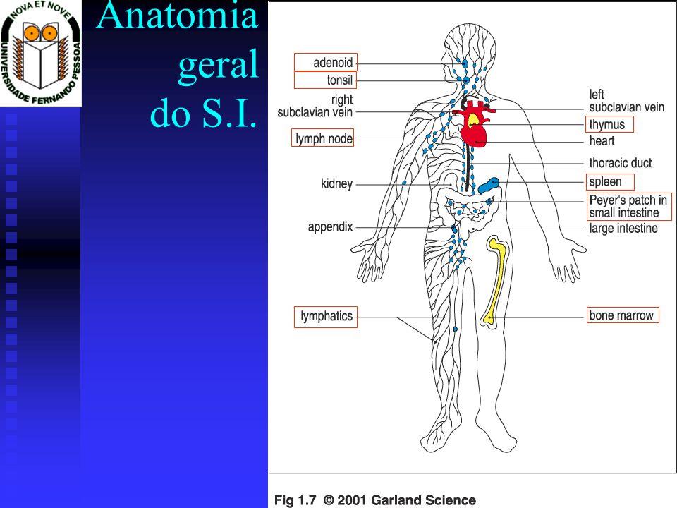 Anatomia geral do S.I.