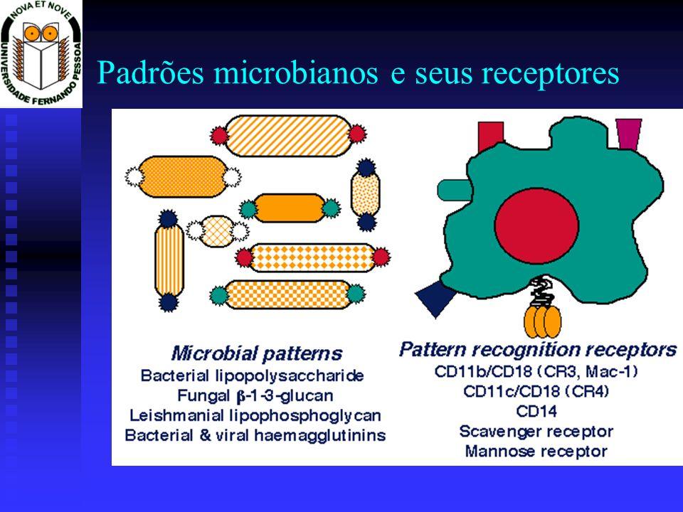 Padrões microbianos e seus receptores
